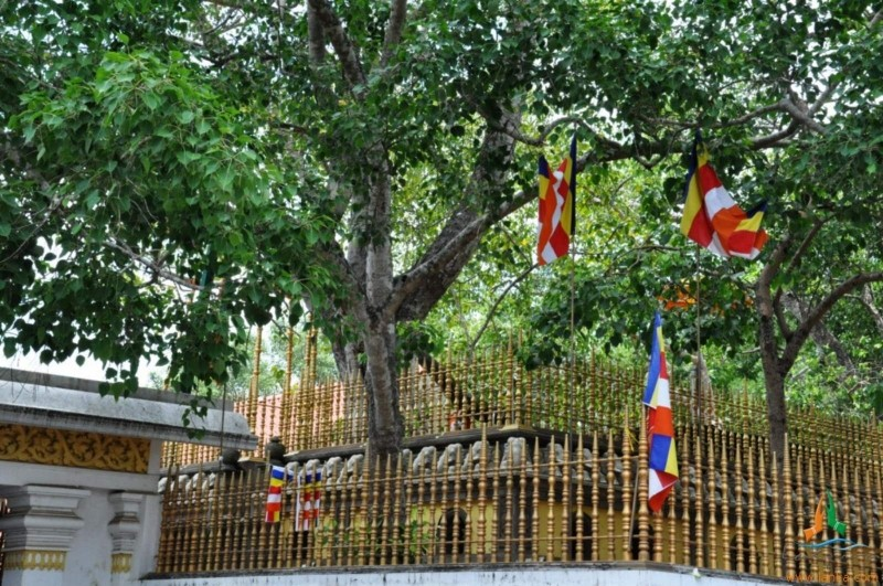 Jaya Sri Maha Bodhi tree in Anuradhapura Sri Lanka, Pilgrimage Destinations In Sri Lanka