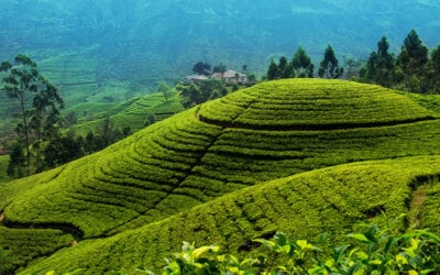 Nuwara Eliya Tea Country