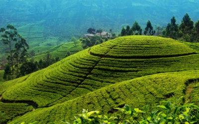 Nuwara Eliya Tea Country