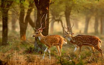 Sri Lanka Wildlife Holidays