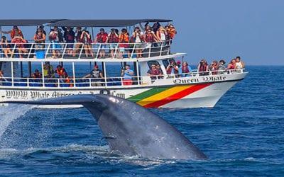 Blue Whale Show