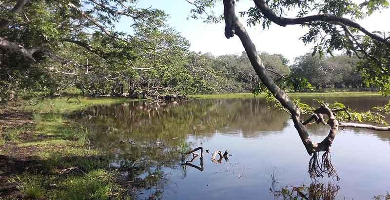 Kumbuk Vila in Wilpattu National Park